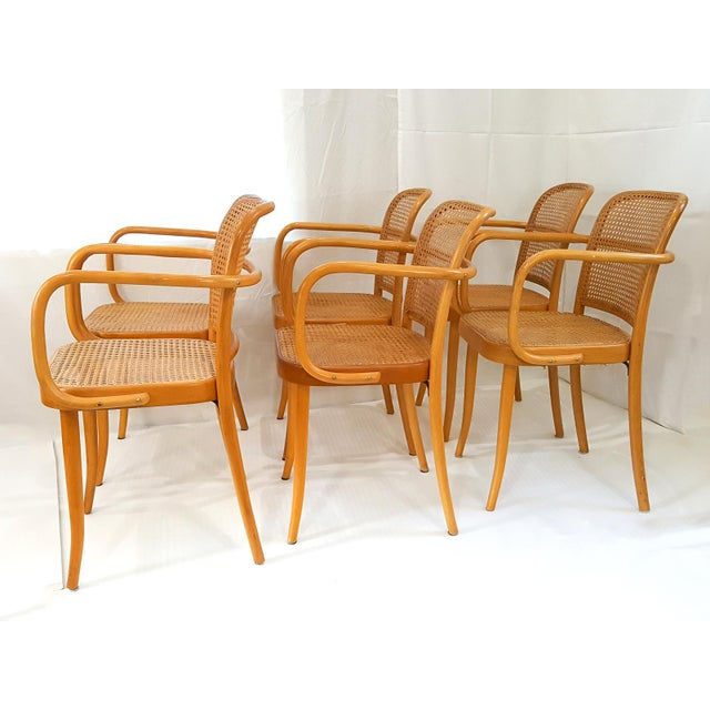 Beech Vintage Stendig Cane Bentwood Dining Chairs- Set of 6 For Sale - Image 7 of 12