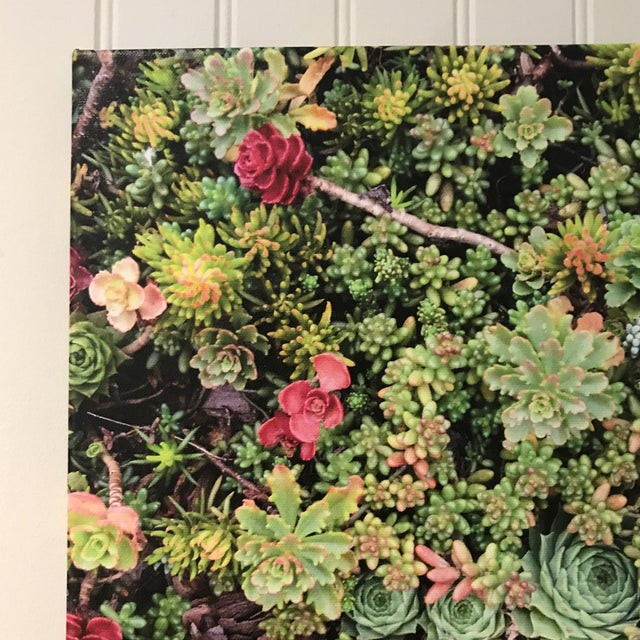 """2010s """"Succulents"""" Photograph on Canvas For Sale - Image 5 of 10"""