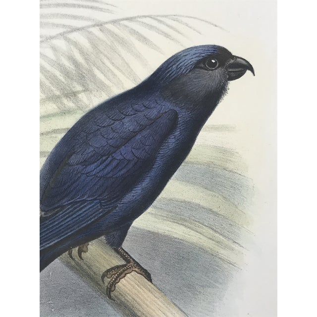 1900 - 1909 Antique Color Lithograph of Blue Bird Ibis C.1907 For Sale - Image 5 of 6