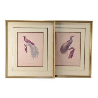 Pair of Colored Ornithological Engravings After Jacques Barraband For Sale