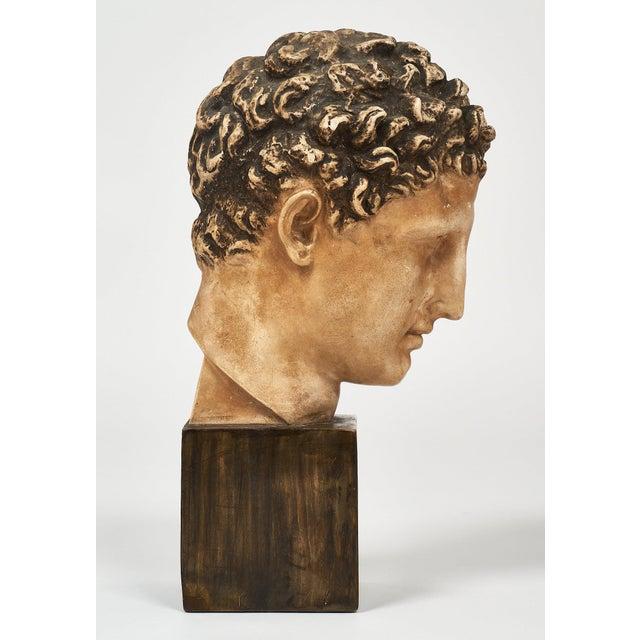 Plaster French Vintage Hermes Bust For Sale - Image 7 of 12