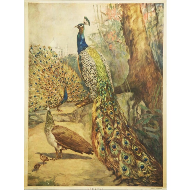 Paper Swedish vintage peacocks school poster For Sale - Image 7 of 7