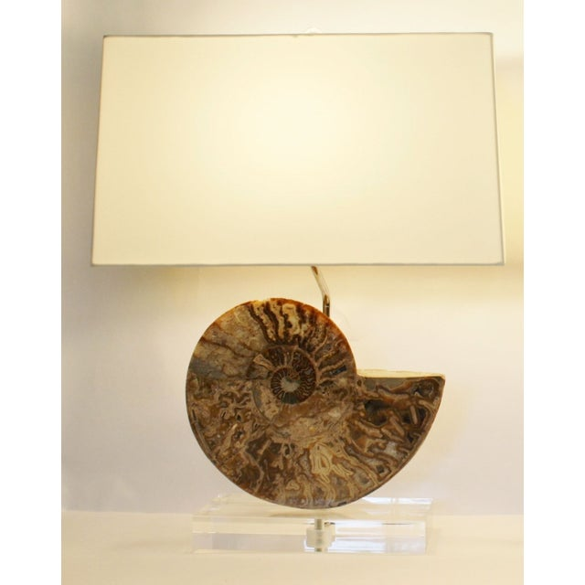 Ammonite Fossil Lamps - A Pair - Image 3 of 4