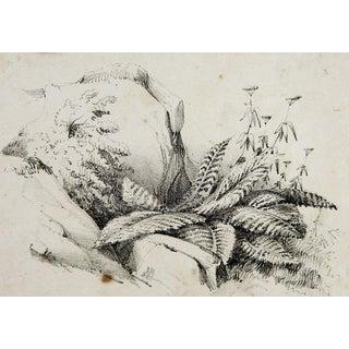 Circa 1900 Nature Study Lithograph For Sale