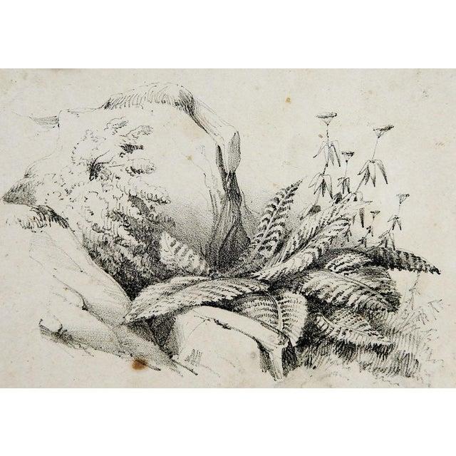 Circa 1900 Nature Study Lithograph - Image 1 of 3
