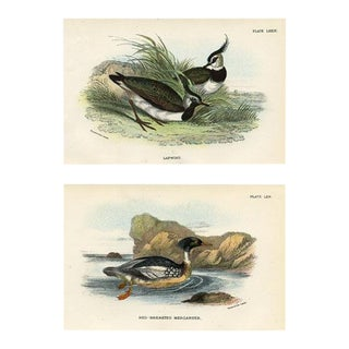 1890s British Shorebird Prints, Pair For Sale