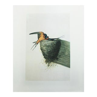 1966 Cottage Lithograph of Barn Swallow by John James Audubon For Sale