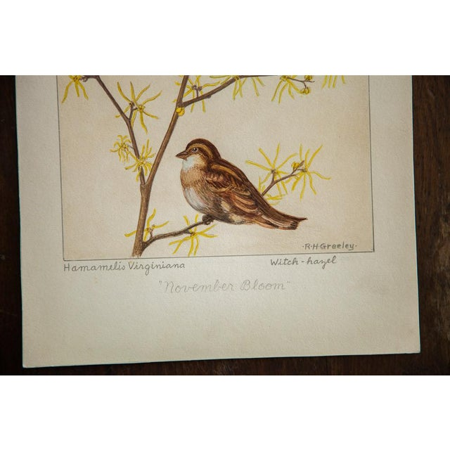 R.H. Greeley Witch-Hazel Botanical Watercolor For Sale - Image 4 of 5