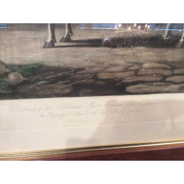 Traditional 19th Century English Livestock Print For Sale - Image 3 of 4