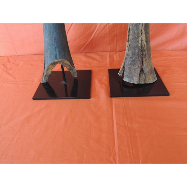 Regency Vintage Pair of Marlin Fish Bills Mounted on Metal Stands From the Bahamas For Sale - Image 3 of 6