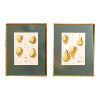 Botanical Pear Prints | Samuel Berghuis G Severeyns | 19th Century Chromolith For Sale