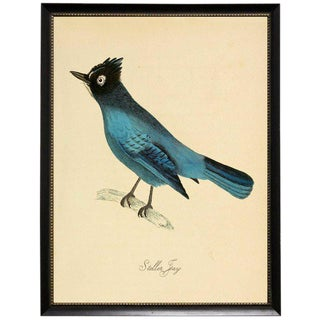 Blue Garrulus Caronatus in Black Moulding With Silver Bead - 25ʺ × 31ʺ For Sale