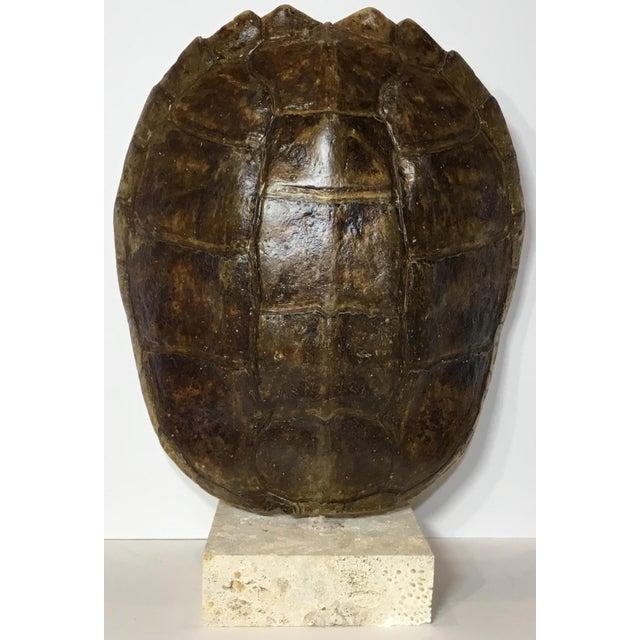 Vintage Turtle Shell on Coral Base - Image 9 of 9