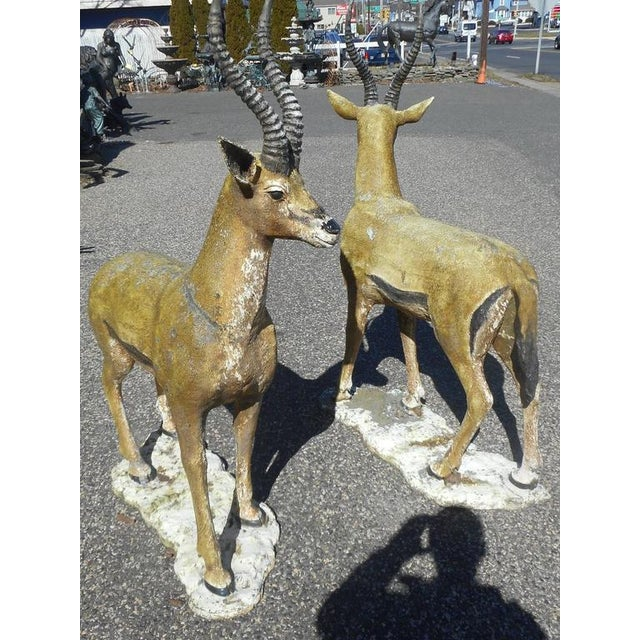 This stunning pair of bronze deer statues feature long curved horns, wide doe eyes, and hooves. The realistic features...