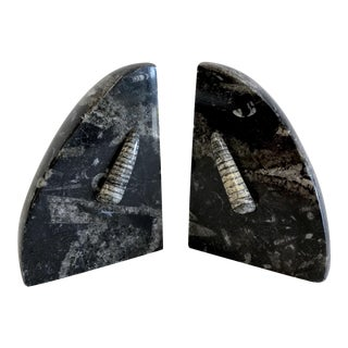 Trilobite Fossil & Black Granite Bookends - A Pair For Sale