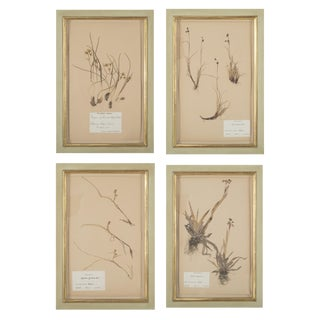 Early 20th Century French Herbiers in Celadon Glazed Frames For Sale