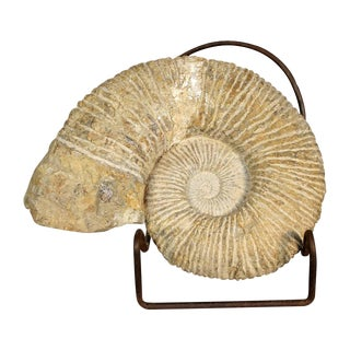 Shell-Shaped Ammonite Fossil on Iron Stand For Sale