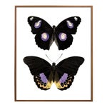 Carnaby Butterflies in Purple and Yellow Art