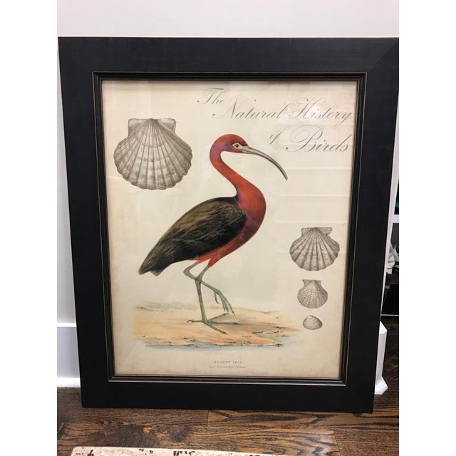 Shell and Stork Beach Prints - A Pair - Image 7 of 11