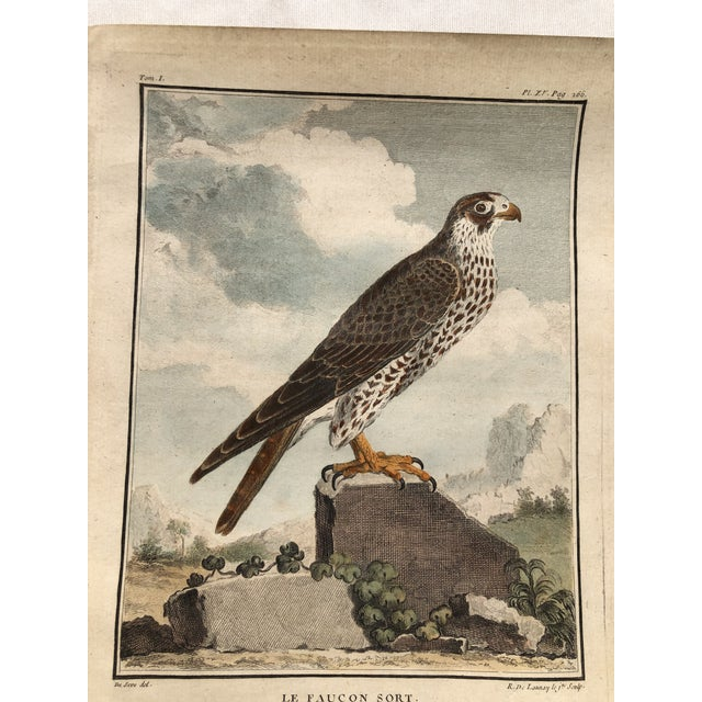 18th Century French Bird Engraving Signed by Jacques De Sève Featuring a Falcon For Sale - Image 11 of 13