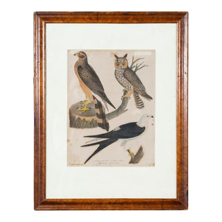 Antique Ornithology Print I For Sale