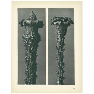 1928 Silver Fir by Karl Blossfeldt, Original Period Photogravure N21 For Sale