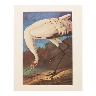 1960s Vintage Audubon Whooping Crane Reproduction Lithograph Print For Sale