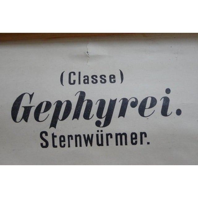 Midcentury Schoolhouse Print of Worms, Printed in Germany in German For Sale - Image 10 of 13