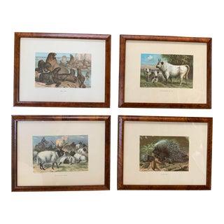 Framed Vintage Animal Prints - Set of 4 For Sale