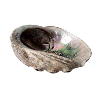 Abalone Shell For Sale