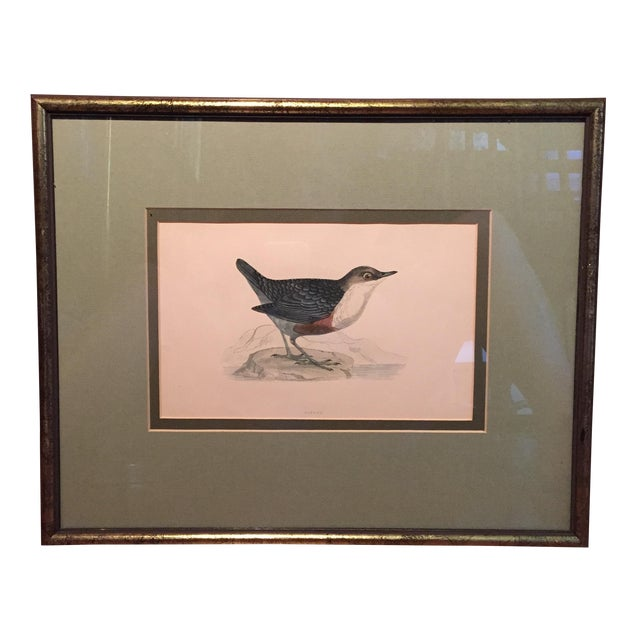 18th C. English Bird Prints in Matching Frames - Image 12 of 12