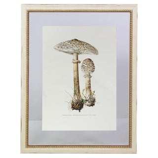 "Antique French Botanic Mycology Study Lithograph - Macrolepiota Procera ""Parasol"" Mushroom For Sale"