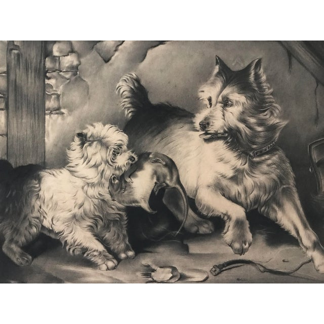 English Traditional Antique Charcoal Drawing of Terriers For Sale - Image 3 of 5