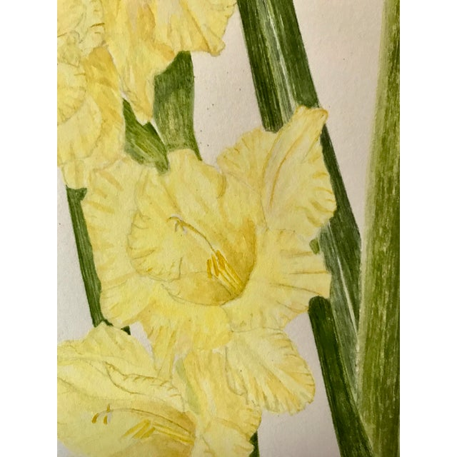 Realism Vintage Watercolor Painting of Iris and Gladiolas by Delonga For Sale - Image 3 of 6