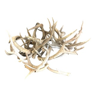 Naturally Shed Deer Antlers - Set of 21