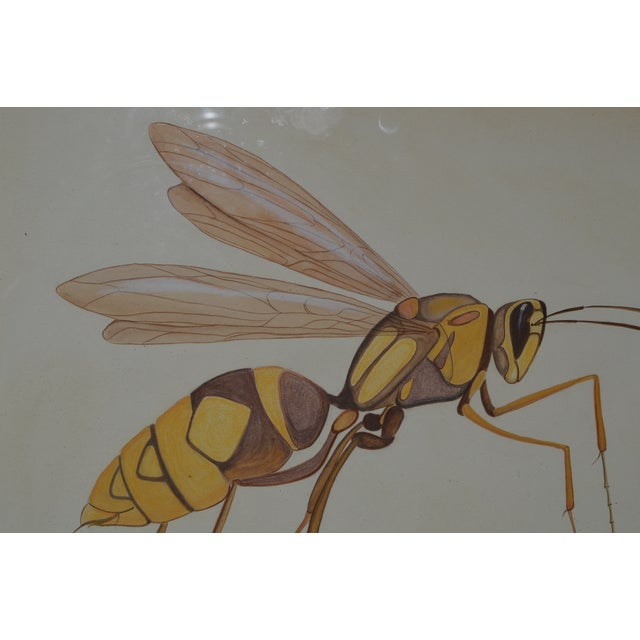 Drawing/Sketching Materials Insect Ant Pencil Paper Framed Art Still Life Painting Drawing Signed Payne For Sale - Image 7 of 12