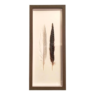 Two Feathers Framed Under Glass by Kalalou For Sale