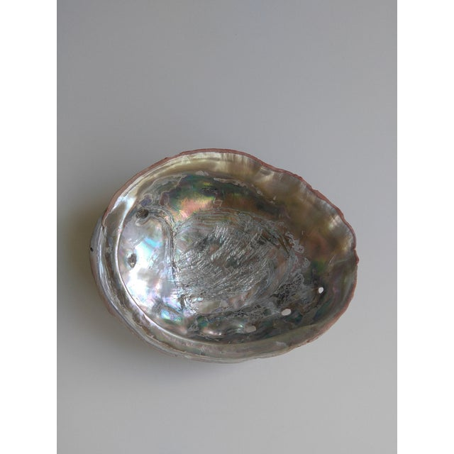 Red Red Abalone Shell Object For Sale - Image 8 of 9