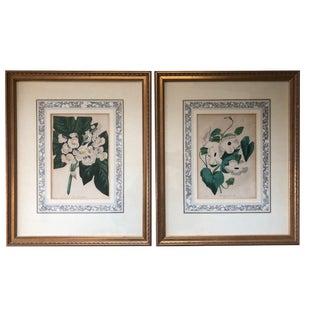 Antique Botanical Prints - Set of 2 For Sale