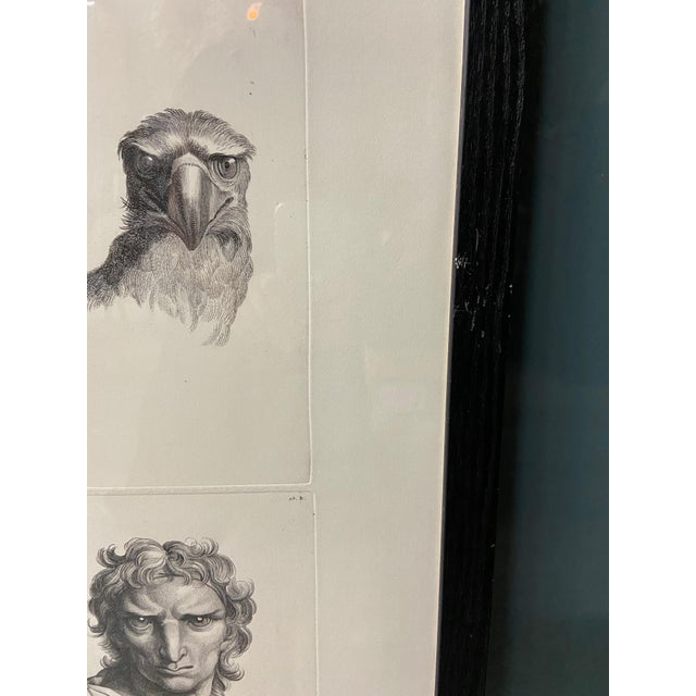 Early 20th Century Man as Eagle - Physiognomic Heads Series Framed Illustration by Charles Le Brun For Sale - Image 5 of 12