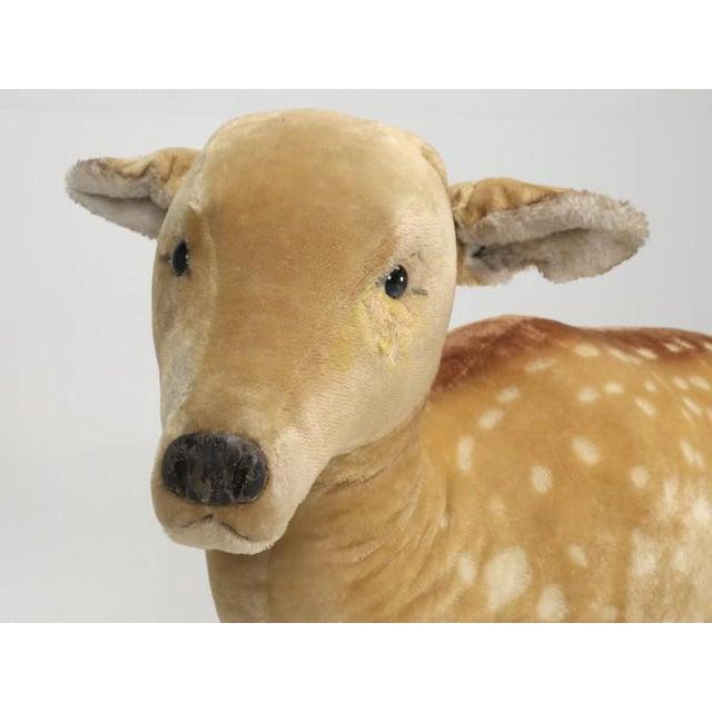 "1963 Steiff Mohair Fallow Deer ""Studio Animal"" For Sale In Chicago - Image 6 of 13"