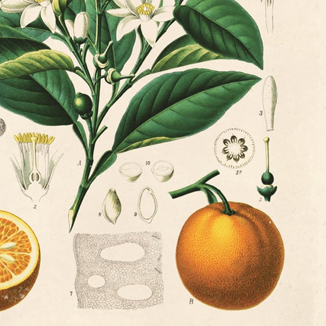 Botanical Orange Citrus Fruit Print Poster - Image 2 of 3