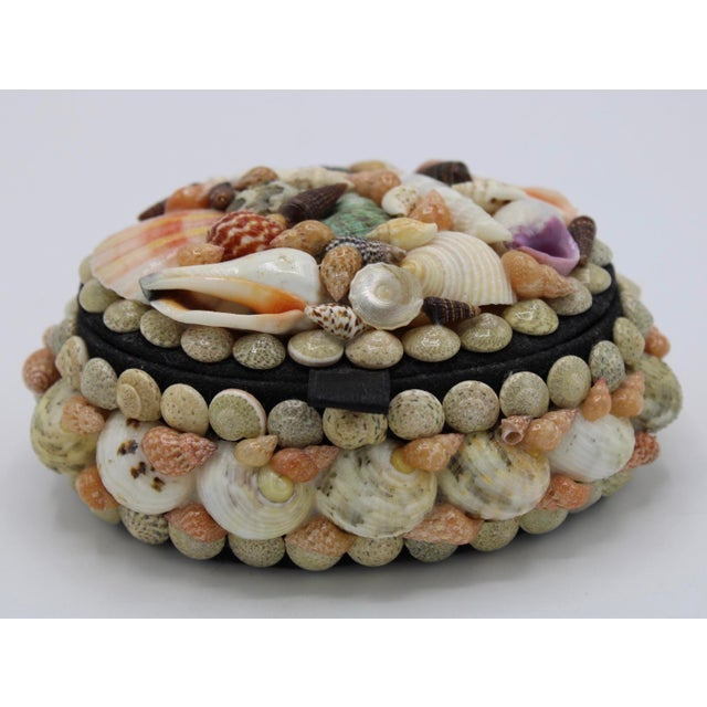 Textile Mid 20th Century Vintage Organic Seashell Jewelry Treasure Box For Sale - Image 7 of 12