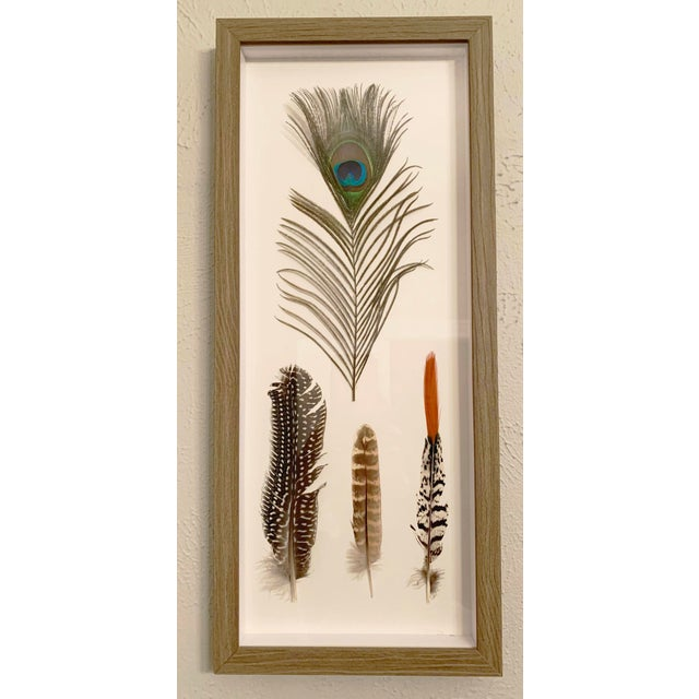 Four Feathers Framed Under Glass made by Kalalou. Each feather is real and mounted on back matting in shadow box style....
