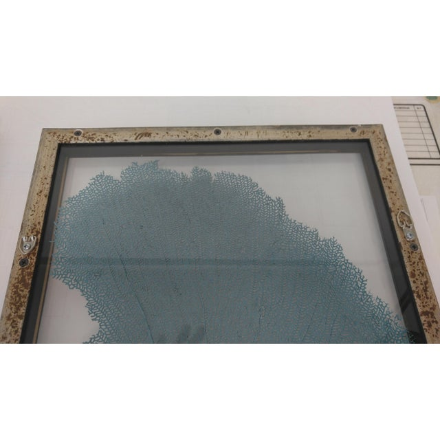 Blue Haze Sea Fan in Antiqued Silver Frame For Sale - Image 4 of 10