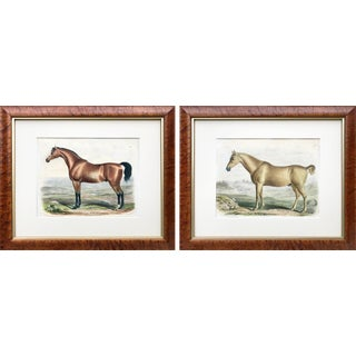 19th C Horse Color Lithograph Prints by Francis Nicholson/William Shiels-Pair C.1840 For Sale