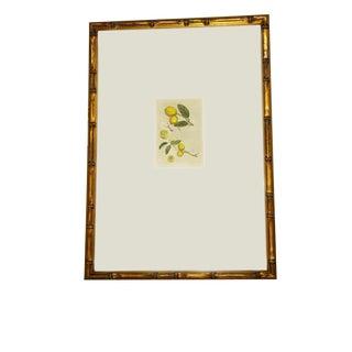 Custom Framed Lemon Print