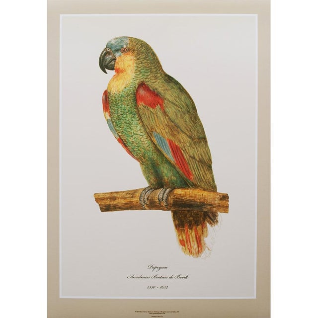 Drawing/Sketching Materials 1590s Large Print of Parrot by Anselmus Boëtius De Boodt For Sale - Image 7 of 8