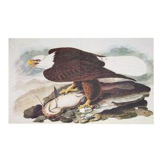1966 XL White-Headed Eagle by Audubon Print