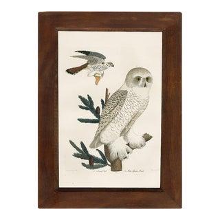Snow Owl Framed Print For Sale
